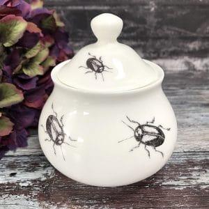 sugar bowl beetle