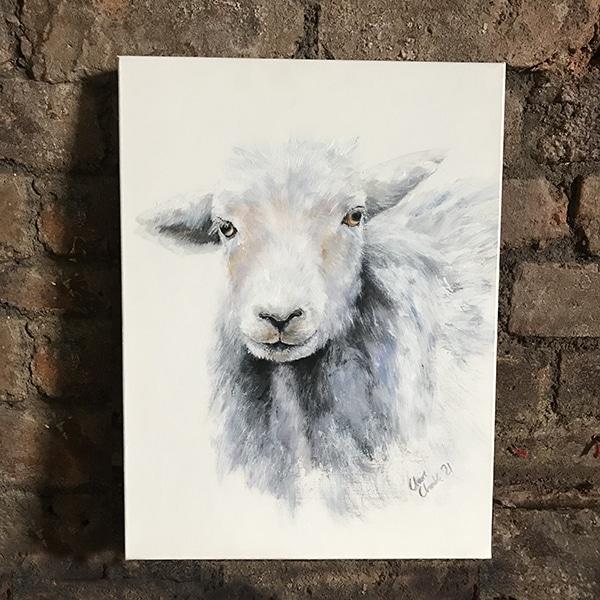 Herd 1 Herdwick ewe