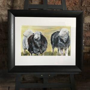 Herd 5 Local flock