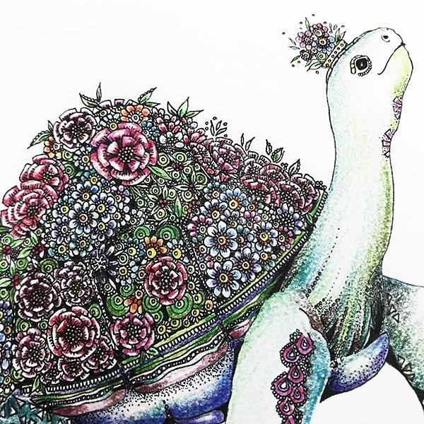 Tortoise close up