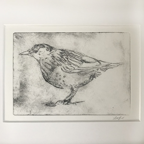 Dry point etching bird close up