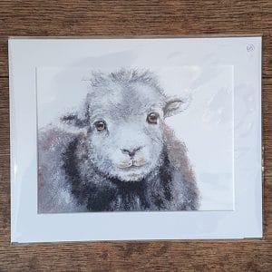 Print 4 Herdwick Sheep